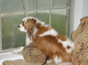 Blog picture of Caleb looking out window